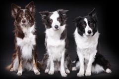 Hundefoto Hundefotograf Professionel fotograf Kastrup Jægerspris Skibby Amager Frederikssund_Mikkel_Urup (4)