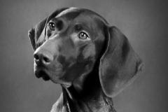 Hundefoto_klassisk_Dygtig_dyrefotograf_Kastrup_Amager_Frederikssund_Skibby_Jægerspris (1)