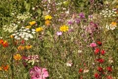 blomster_udendørs_fotostudie_jægerspris_skibby_fotograf_bryllup