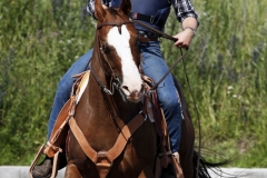 Hestefoto Hestefotograf Professionel fotograf Kastrup Jægerspris Skibby Amager Frederikssund_Mikkel_Urup (4)