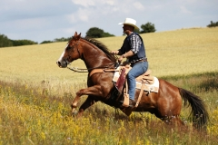 Hestefoto Hestefotograf Professionel fotograf Kastrup Jægerspris Skibby Amager Frederikssund_Mikkel_Urup (5)